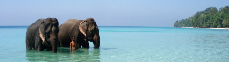 more-sloni